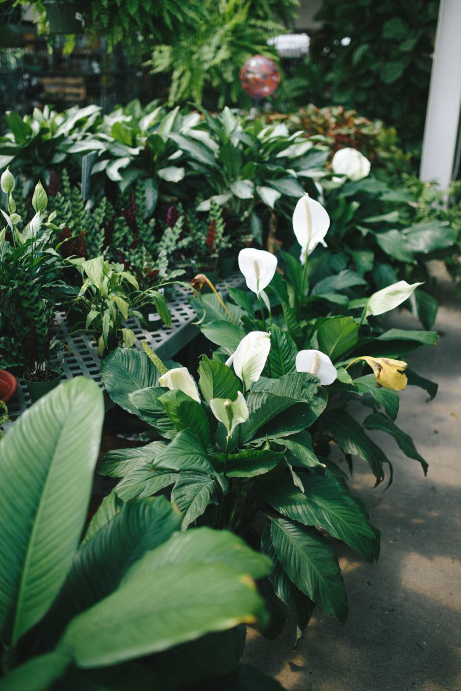 Greenhouse-12