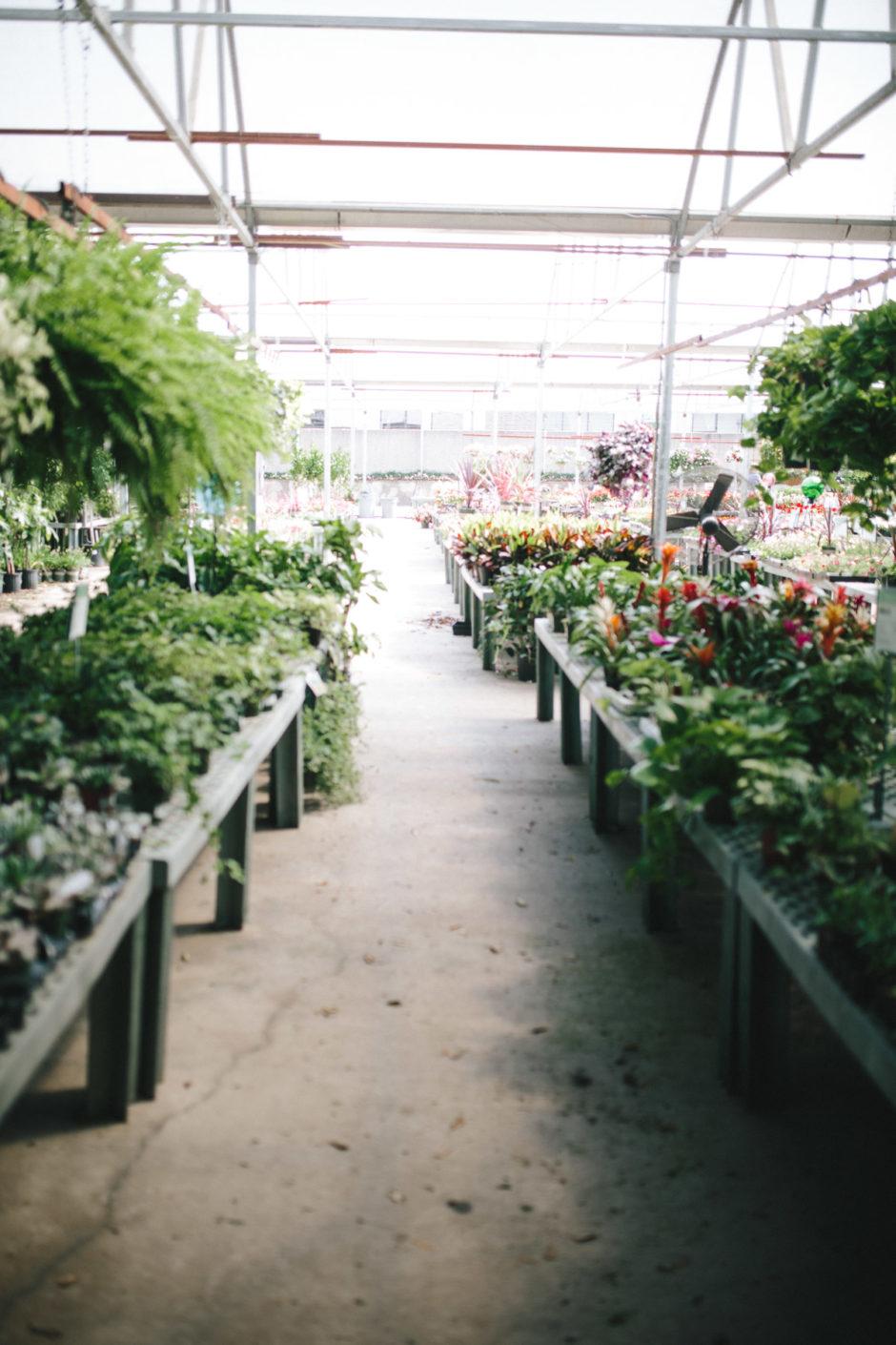 Greenhouse-19