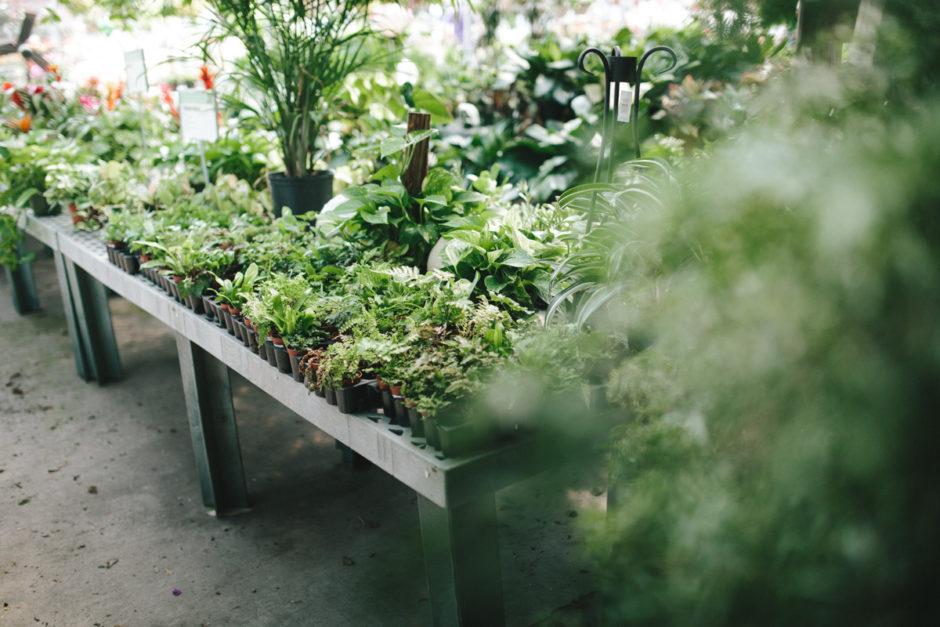 Greenhouse-20